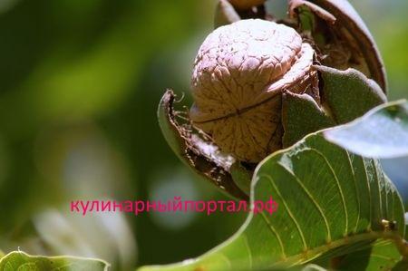 Продукт для молодости: бразильский орех